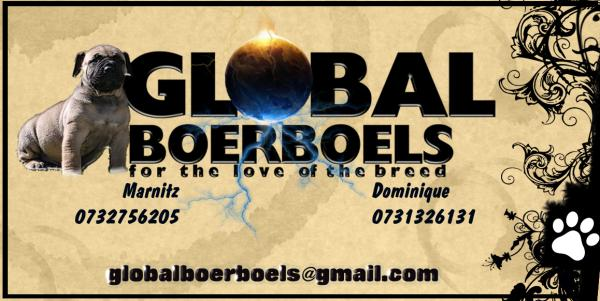 Global Boerboels